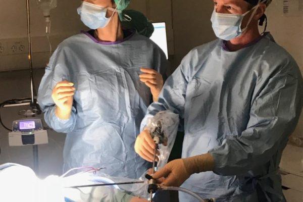 Dalia under operation. Veterinär